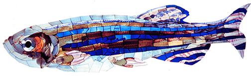 Mosaic image of Adult Zebrafish made from discarded data slides