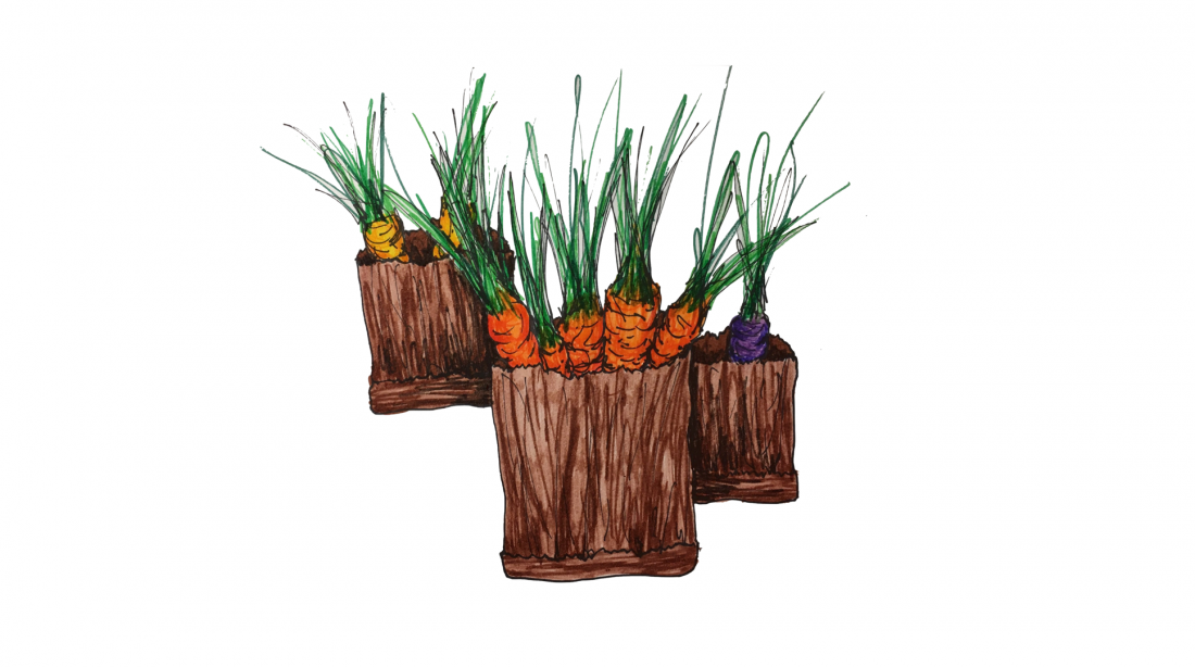 Illustration of carrots in bags