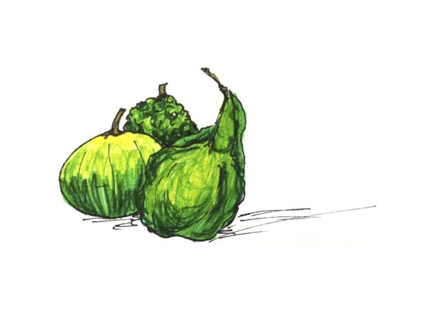 Illustration of three green gourds